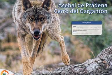 Ruta Acebal de Prádena y Cerro Gargantón