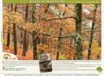 ruta bosque de mojonovalle canencia_Madrid2