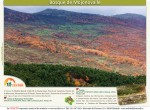 ruta bosque de mojonovalle canencia_Madrid6