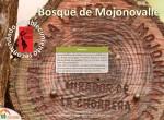 ruta bosque de mojonovalle_canencia