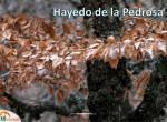 Ruta Hayedo de La Pedrosa